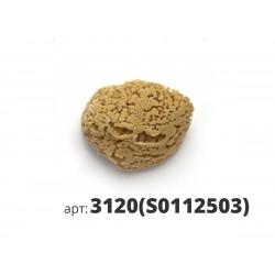 PAVAN натуральная губка морская 3120(S0112503)